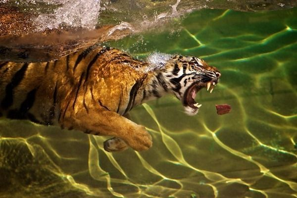 national-geographic-photography-contest-2011-14
