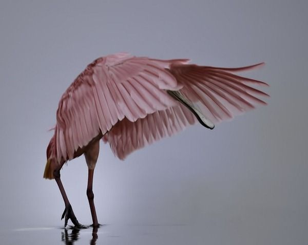 national-geographic-photography-contest-2011-33