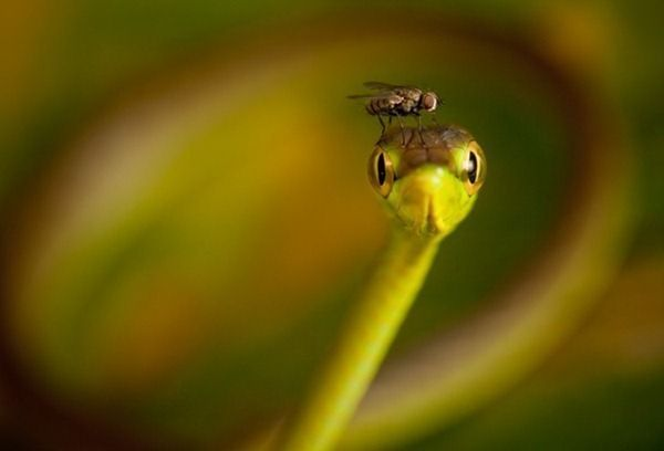 national-geographic-photography-contest-2011-30